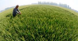 耕地承包期届满后再延30年,进城落户农民无须交地。